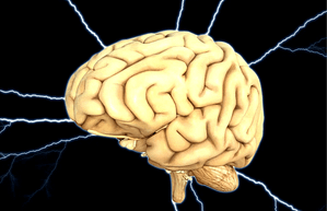 modafinil enhaces cognitive functions