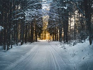 a snowy road with trees